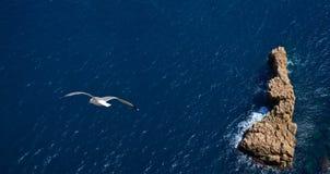 Volo del gabbiano sopra il mare Fotografia Stock
