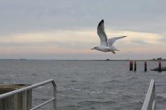Volo del gabbiano sopra il mare Immagine Stock Libera da Diritti