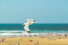 Volo del gabbiano sopra la spiaggia Fotografie Stock Libere da Diritti