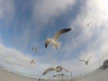 Volo del gabbiano sul cielo Fotografia Stock Libera da Diritti