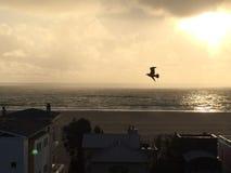 Volo del gabbiano sulla spiaggia in California Fotografie Stock