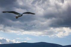 Volo del gabbiano in un cielo tempestoso immagine stock