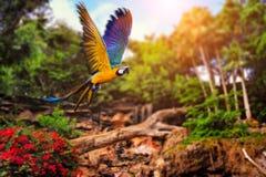 Volo del pappagallo Immagini Stock