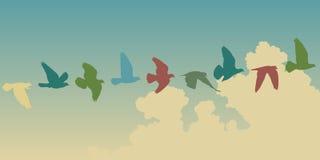 Volo del piccione Fotografia Stock Libera da Diritti