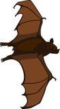 Volo del pipistrello di Brown Fotografia Stock Libera da Diritti