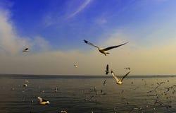 Volo del ` s del gabbiano in un cielo blu Fotografia Stock