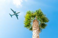 Volo dell'aeroplano del passeggero sopra la palma contro il cielo blu immagine stock libera da diritti