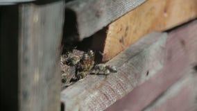 Volo dell'ape davanti ad un alveare video d archivio
