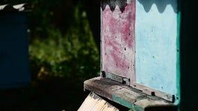 Volo dell'ape davanti ad un alveare stock footage