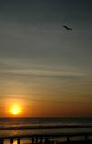 Volo dell'aquilone alla spiaggia con il tramonto Fotografie Stock