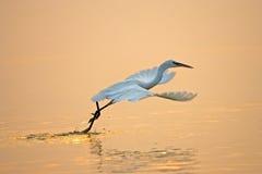 Volo dell'uccello fotografia stock libera da diritti