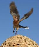 Volo dell'uccello fotografia stock