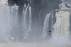 Volo dell'uccello alle cascate di Iguazu Fotografie Stock
