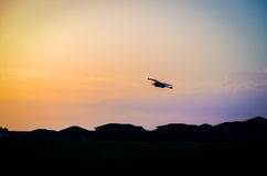 Volo dell'uccello dell'egretta dentro ad un tramonto dei colori dell'arcobaleno, sopra la siluetta dei tetti Fotografie Stock Libere da Diritti