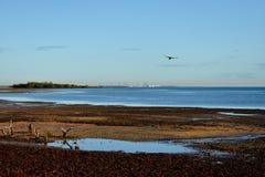 Volo dell'uccello di bassa marea Fotografie Stock Libere da Diritti