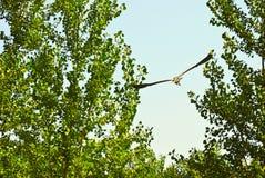 Volo dell'uccello fra gli alberi Fotografie Stock