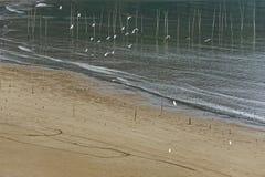Volo dell'uccello marino - paesaggio di Xiapu Fotografie Stock Libere da Diritti