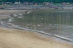 Volo dell'uccello marino - paesaggio di Xiapu Fotografia Stock