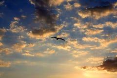 Volo dell'uccello nel cielo di sera fotografia stock
