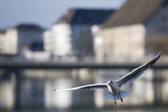 Volo dell'uccello nella città Fotografie Stock