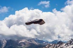 Volo dell'uccello in nuvole fotografia stock