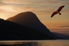 Volo dell'uccello sopra un lago Fotografia Stock