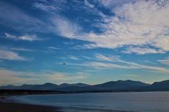 Volo dell'uccello sul cielo blu fotografia stock
