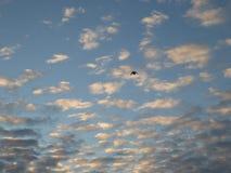 Volo dell'uccello sul cielo nuvoloso immagine stock libera da diritti