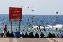 Volo dell'uccello sull'oceano Fotografia Stock Libera da Diritti