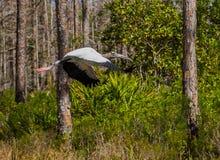Volo della cicogna di legno attraverso la foresta fotografie stock libere da diritti
