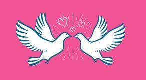 Volo della colomba di bianco Nozze, simbolo di amore Insegna di giorno di biglietti di S. Valentino Immagini Stock