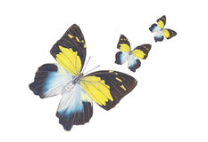 Volo della farfalla Immagine Stock Libera da Diritti