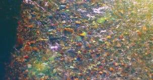 Volo della met? di aria sopra il fiume fresco e pulito della montagna alla mattina soleggiata di estate Movimento di orizzontale  archivi video