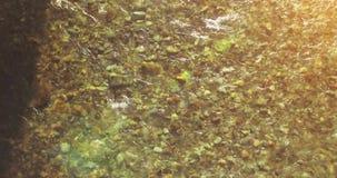 Volo della met? di aria sopra il fiume fresco e pulito della montagna alla mattina soleggiata di estate Movimento di orizzontale  stock footage