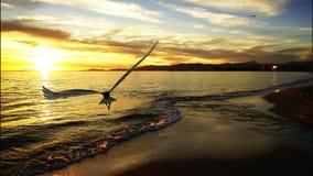 Volo di Eagle Fotografia Stock