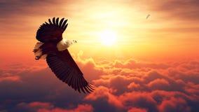 Volo di Eagle di pesce sopra le nuvole Fotografia Stock Libera da Diritti