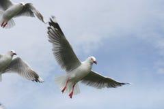 Volo di libertà Immagini Stock Libere da Diritti