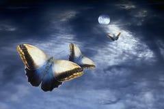 Volo di luce della luna Immagine Stock