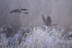 Volo di mattina fotografia stock libera da diritti