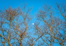 Volo di tramonto sopra la luna piena Immagine Stock Libera da Diritti