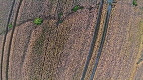 Volo e decollo sopra il giacimento di grano, vista panoramica aerea Immagini Stock Libere da Diritti
