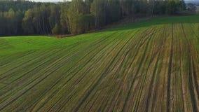 Volo e decollo sopra le colline verdi ed i campi al tramonto, vista aerea stock footage