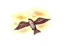Volo Eagle (Zen Pictures II, 2012) Fotografia Stock Libera da Diritti