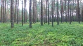 Volo fra gli alberi in foresta archivi video