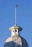 Volo fuori dallo steeple di vecchia costruzione in Weymouth, volo del gabbiano Fotografia Stock Libera da Diritti