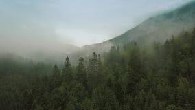 Volo mistico e nebbioso del fuco sopra la foresta pluviale in montagna Chiuda sulla vista video d archivio