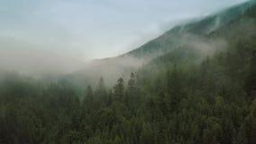 Volo mistico e nebbioso del fuco sopra la foresta pluviale in montagna Chiuda sulla vista movimento verso indietro stock footage