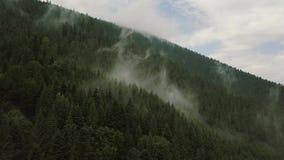 Volo mistico e nebbioso del fuco sopra la foresta pluviale in montagna Elettricità statica di vista archivi video