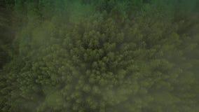 Volo mistico e nebbioso del fuco sopra la foresta pluviale in montagna Mosca sopra la cima della nebbia giù la vista Vista media video d archivio