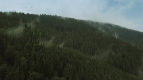 Volo mistico e nebbioso del fuco sopra la foresta pluviale in montagna Vista vicina Muova la macchina fotografica archivi video